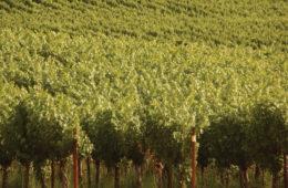 Hendrickson Family Vineyards