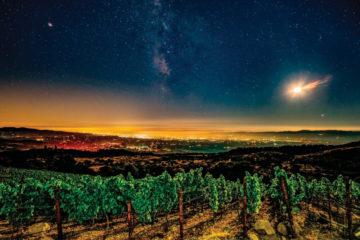 Lobo Wine Napa Valley