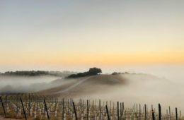 copia vineyards