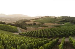 progeny winery