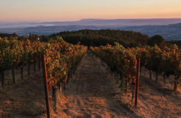 lamprey vineyards